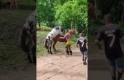 At Çiftliğinde Atlar Çiftleştiriliyor,