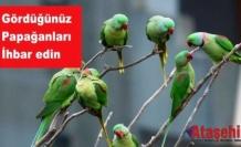 Papağanları Gördüğünüz Yerde ihbar edin