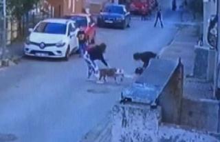 Ataşehir'de pitbull dehşeti