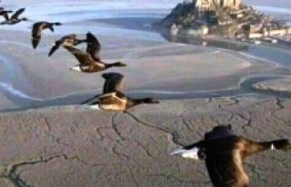 Kazlar neden tek sıra halinde uçarlar
