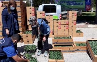 İBB Beykoz'da 82 çiftçiye fide dağıtımına...