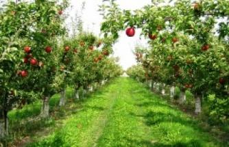 Pendik'e Meyve Bahçeleri