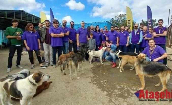 Ataşehir'de barınakta bakılan köpeklere mama yardımı yapıldı
