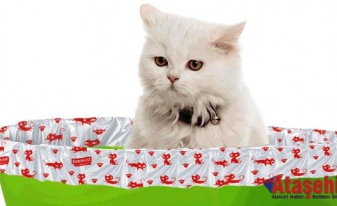 Kedileri evde tutmanın 6 yolu