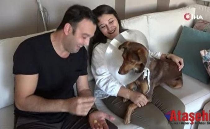 Köpeği ameliyat olan kadına belediyeden bir gün refakat izni