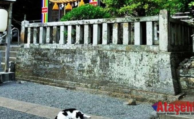 Bugün Japonya'da Kedi Günü!⠀⠀