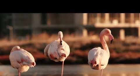 Gediz UNESCO Videosu_Tarkan 2019