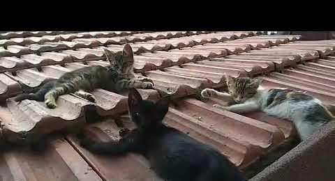 Yenisahra'da Minnoşlar Sıcaktan Sıkılmış Çatıda Yatıyor