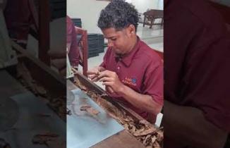 Havana Purosu sarımı nasıl yapılır