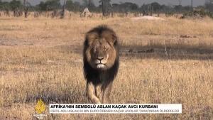 Kaçak avcılar, Afrika'nın en ünlü aslanını öldürüldü. 2015
