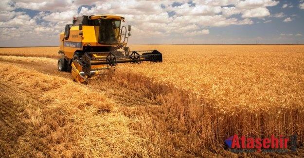 Aliağa Buğdayı'nda ilk hasat yapıldı