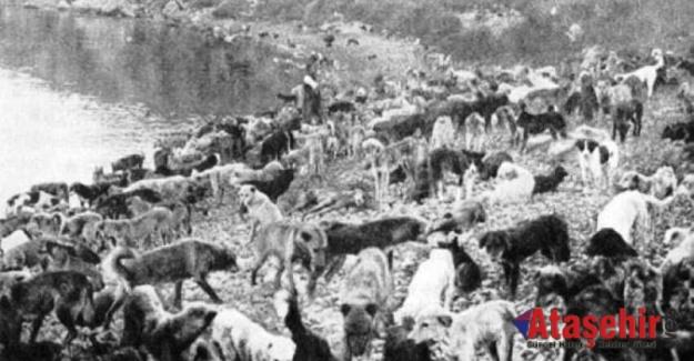 80 BİN KÖPEĞİN ÖLÜME TERK EDİLDİĞİ ADA