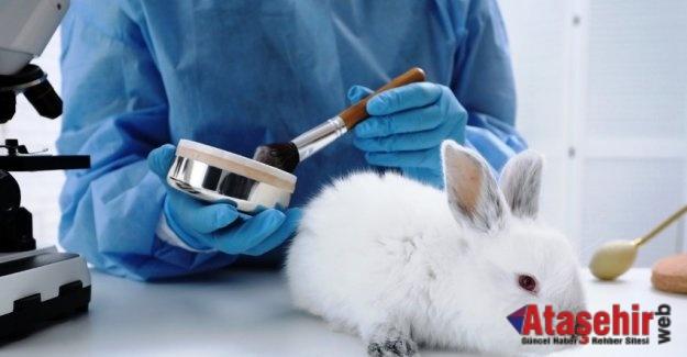 192 milyondan fazla hayvan, deney için laboratuvarlarda tutuluyor!