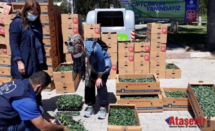İBB Beykoz'da 82 çiftçiye fide dağıtımına başladı