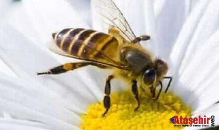 Arı Sokması Ölüme Neden Olur Mu?