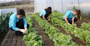 Tarım lisesi öğrencileri, Yerli tohum toplayıp üretime başladı.