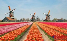 HOLLANDA'YA YERLEŞME BAŞVURULARI ARTIYOR