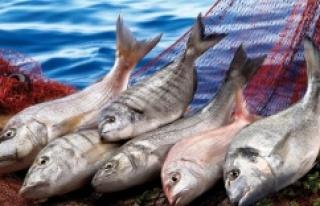 Amerika'ya balık ihracatımız 9 yılda 115 kat...