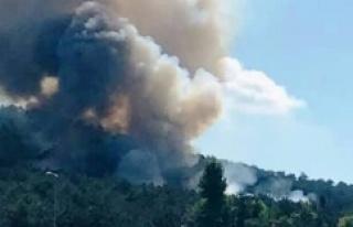 Ataşehir'de ormanlık alanda çıkan yangın...