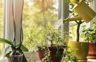 Evde kendi olanaklarıyla bitki yetiştirmek isteyenlere...