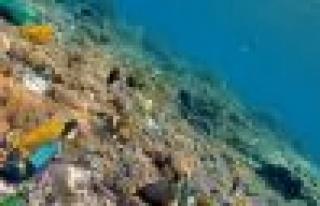 Denizin dibinde antibiyotik arayışı