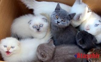 Edirne Gümrük (TASİŞ) den ihale ile kedi satışı!