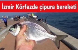 İzmir Körfezde çipura bereketi