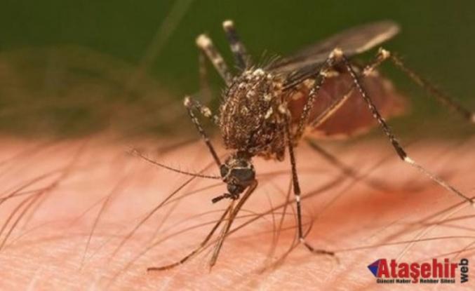 Sivrisinekten nasıl kurtulunur?